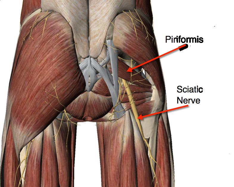臀部の坐骨神経