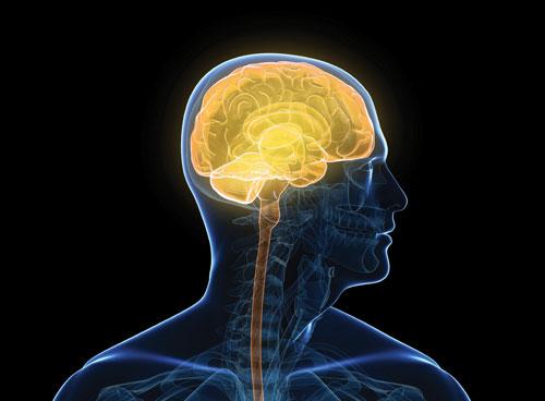 中枢神経系の調整