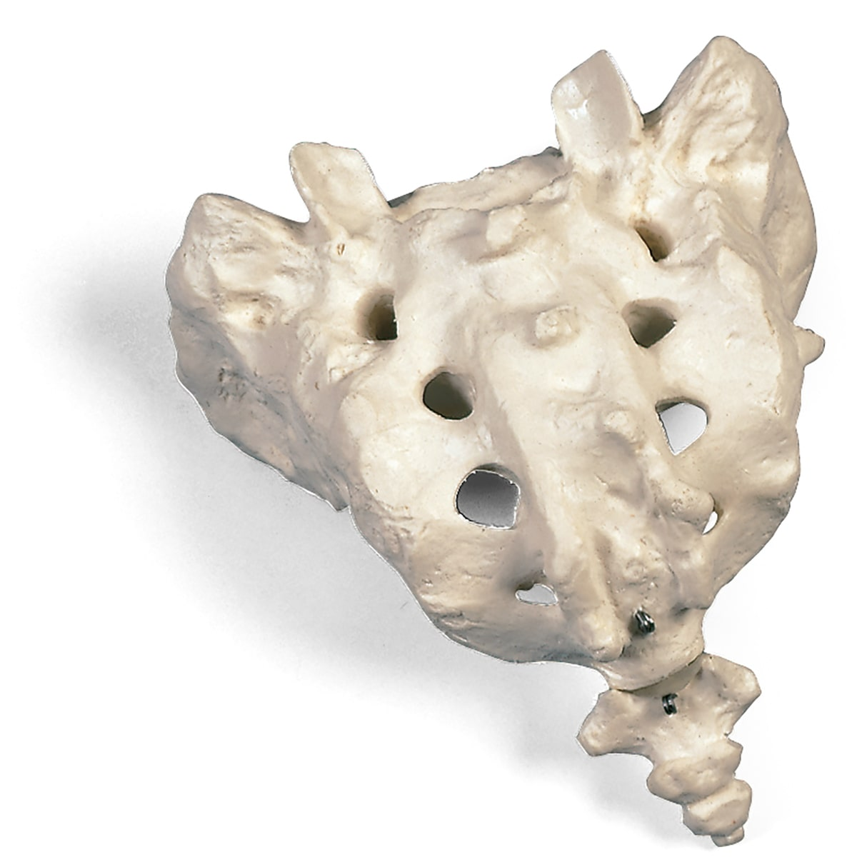 坐骨神経痛の改善ポイント 仙骨