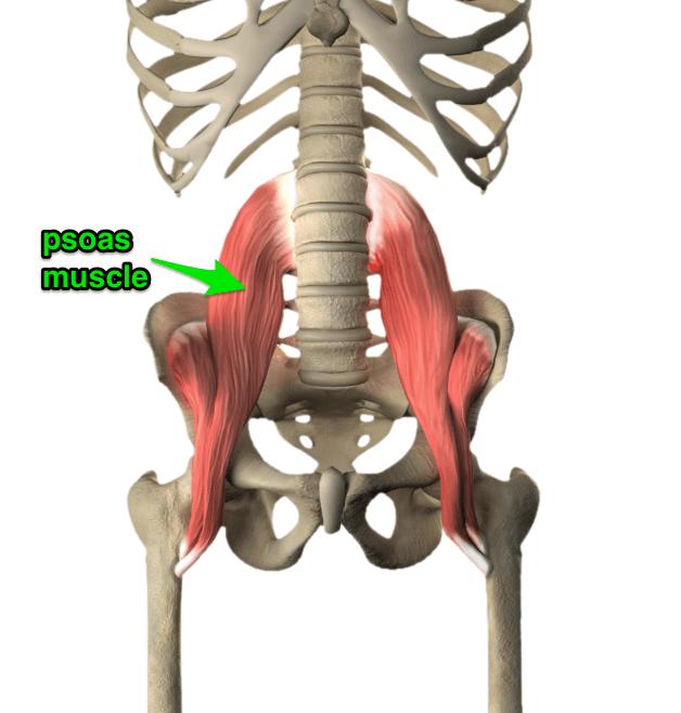 腎臓は大腰筋とつながる