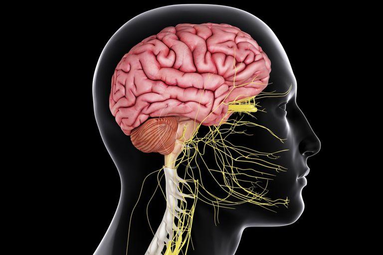 めまいと脳の関連